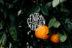 Central Kitchen logo overlaid on top of orange tree