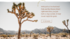 Detail of website describing Things to Do in 29 Palms